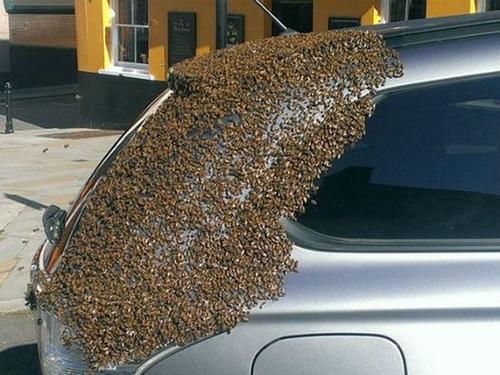 Las abejas suelen seguir a su reina si se cambia de colmena. (Foto: playgroudmag.net)