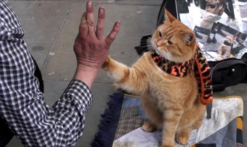 """Bob """"choca los cinco"""" con su amo cada vez que este le ofrece una chuchería gatuna. (Foto: Youtube)"""