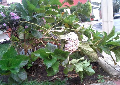 El fuerte viento ocasionó que ramas de árboles cayeran y flores se quebraran. (Foto:Soy502)