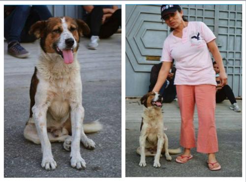 Beto se reencuentra con su dueña. (Fotos Pet Rescue Guatemala)