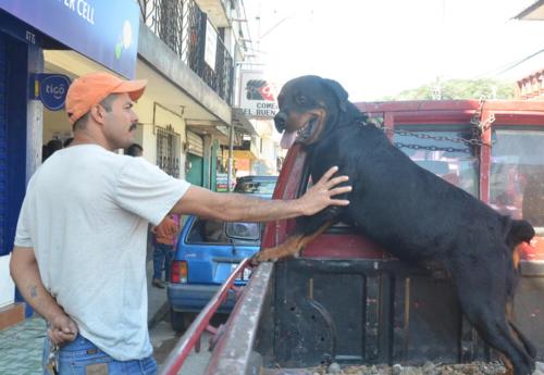 Este es el perro que atacó a la menor y que posteriormente fue envenenado por desconocidos. (Foto: José Sánchez/NuestroDiario)