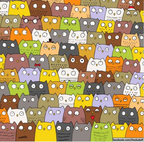 Debes encontrar el gato que se encuentra escondido entre todos los búhos.