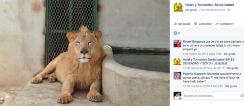 Según el mismo perfil de Facebook del Hotel Santa Isabel, son tres leones africanos los que tienen en el zoológico privado. (Foto: Facebook)