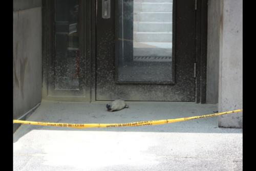 Vista del artefacto que fue lanzado a la puerta de la embajada de Estados Unidos.