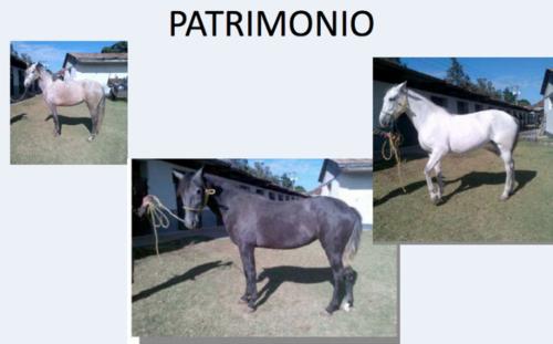 Entre los bienes de Lima, hay ocho caballos pura raza. (Foto: MP)