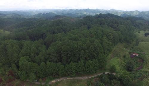 """""""La Conservación del quetzal"""" se ubica en Alta Verapaz. (Foto: captura drone/Soy502)"""