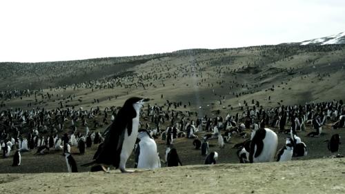 El video muestra imágenes espectaculares de flora y fauna. (Foto: Captura de pantalla)