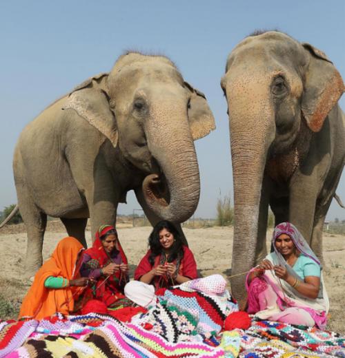 Las mujeres donaron su talento para vestir a los elefantes maltratados. (Foto: Infobae)