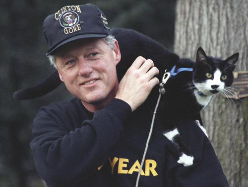 Socks fue el gato de la familia Clinton, quien ocupó un puesto importante en el corazón de los habitantes y trabajadores de la Casa Blanca. (Foto: flickr)