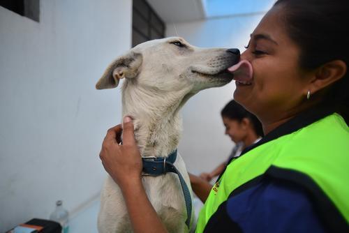 No hay manera más grande de mostrar amor a tu perrito o gatito que estar pendiente de su salud. (Foto: Wilder López)