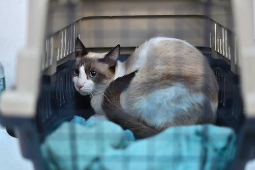 """Te recomendamos que uses una """"jaula transportadora"""" para llevar a tu mascota al médico, es la forma más cómoda y eficaz de visitar al médico. (Foto: Wilder López/Soy502)"""