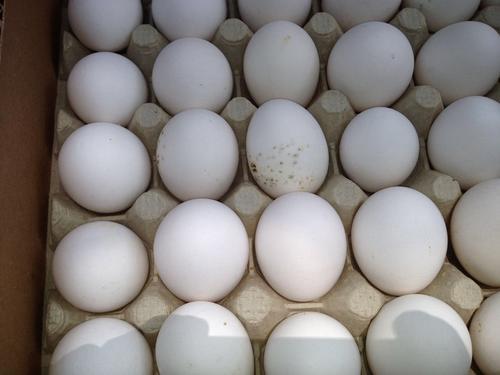 Huevos con muestras de descomposición en el decomiso realizado el 9 de agosto. (Foto: MAGA)