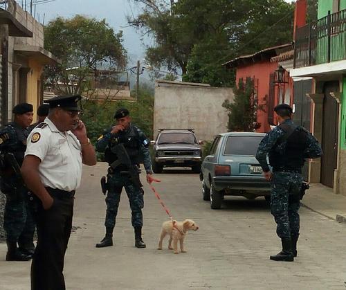 La mascota observaba cómo su hogar era allanado mientras un agente policial lo cuidaba. (Foto: Pablo Solís/Nuestro Diario)
