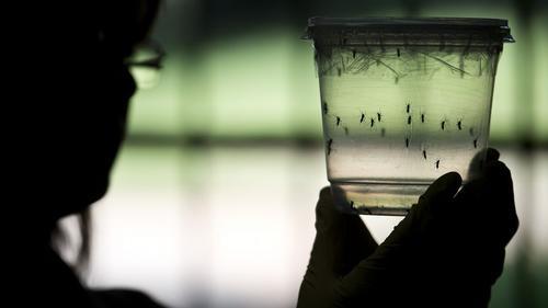 Las muestras de casos sospechosos del virus Zika debían ser enviadas al laboratorio de la Agencia de Salud Pública del Caribe en Trinidad. (Foto: AFP)