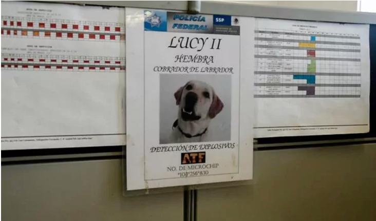 Actualmente, Lucy es una agente retirada pero durante varios meses fue un elemento activo con amenazas de muerte. (Foto Daniel Ojeda/Vice News)