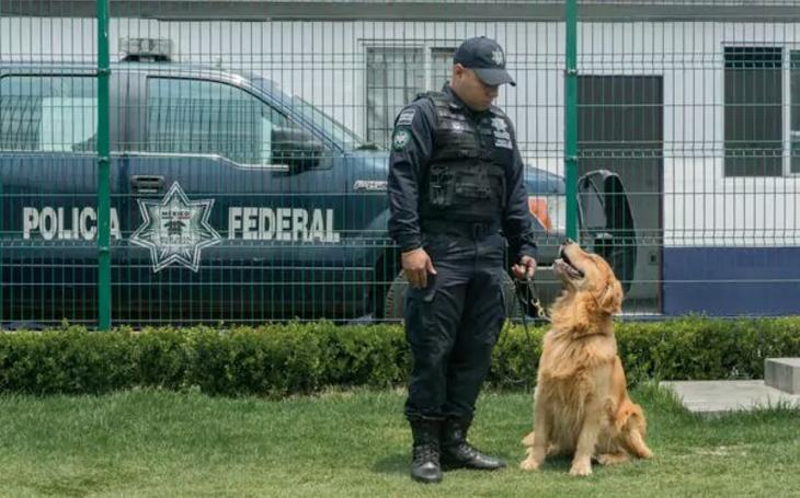 Desde hace al menos siete años, la Policía Federal sabe que los criminales le han puesto precio a la cabeza de sus perros. (Foto. Daniel Ojeda/Vice News)