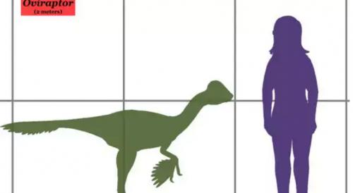 Así luce el verdadero oviraptor, el letrero tuvo que ser cambiado por el museo. (Foto: Infobae)