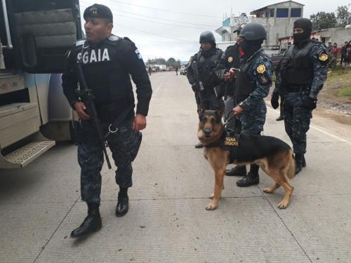 """El agente K9 """"Barry"""" fue quien alertó a las autoridades sobre el hallazgo en el tráiler. (Foto: PNC)"""