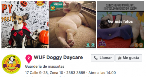 WUF Doggy Daycare. (Foto: Facebook)