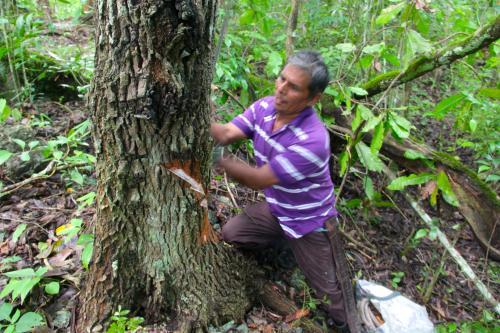 Uaxactún empezó como un campamento de chicleros, pero rápido se convirtió en una comunidad en medio de la selva. (Foto: Fredy Hernández/Soy502)