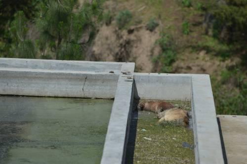 La planta de Nahualá tenía dos perros muertes flotando en el agua estancada (Foto: Jesús/Alfonso)
