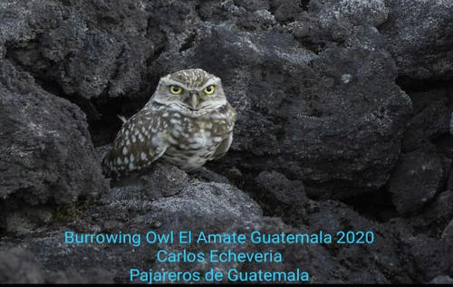 Esta noticia ha generado alegría para las autoridades encargadas de la conservación y las áreas protegidas.