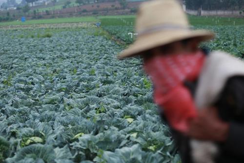 Un trabajador agrícola llega a su parcela para otro día más de trabajo durante el brote de Covid-19 en la ciudad de Chimaltenango, Guatemala. (Morena Pérez-Joachín/Ruda)