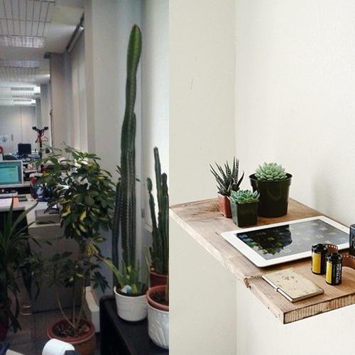 Cactus de diferentes tamaños son buenos para lugares cerrados.
