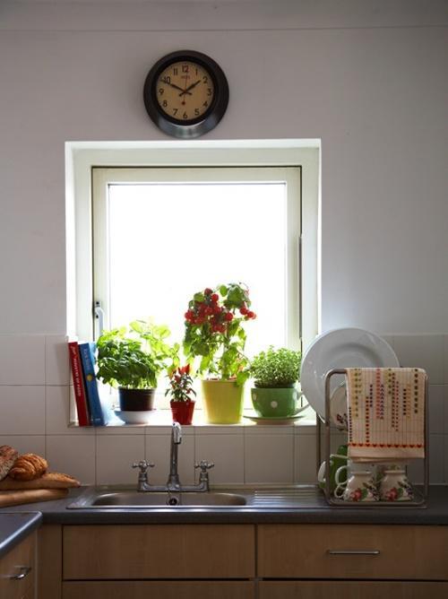 Las plantas que puedes tener en tu cocina pueden ser útiles para recetas de comida.