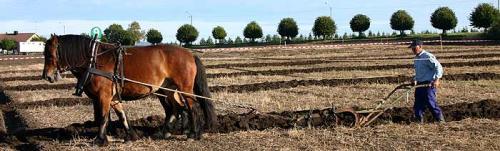 La agricultura en la isla que funge como prisión es ecológica y se basa en la producción sostenible sin el uso de fertilizantes artificiales y fumigación tóxica. (Foto: www.Bastoyfengsel.no)