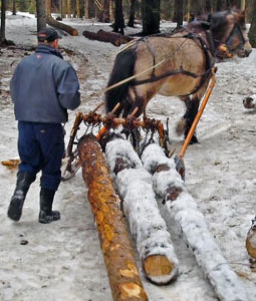 Los reos cortan y transportan madera en el bosque durante el invierno. (Foto: www.bastoyfengsel.no)
