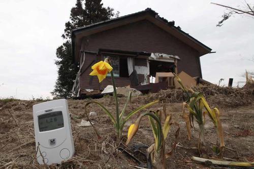El accidente nuclear afectó a la zona con altos grados de radiación que afectan las cosechas y todo tipo de vida.