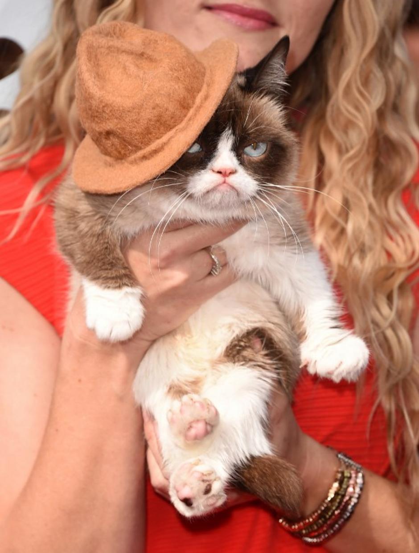 """El famoso """"Gato Gruñón"""" desfiló por la alfombra roja con cara de pocos amigos. (Foto: AFP)"""