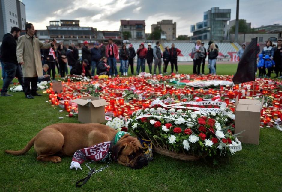 El can permaneció echado al lado de la flores en la cancha del estadio en Bucarest. (Foto: AFP)