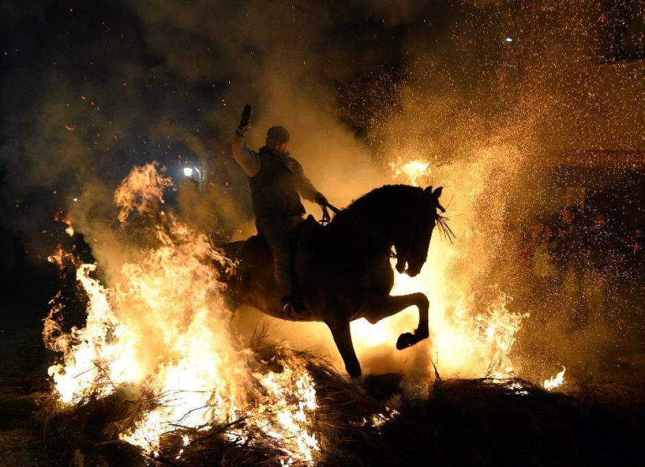 """Un salto de caballo y jinete sobre una fogata ardiente en el pueblo español de San Bartolomé de Pinares, durante las celebraciones por la fiesta de San Antonio Abad, patrón de los animales. Desde tiempos inmemoriales, los dueños de los caballos han condicionado sus bestias para pasar a través de las llamas que marcan un """"folklore religioso"""" considerando el proceso de limpia para el pueblo de cualquier enfermedad. AFP/GERARD JULIEN"""
