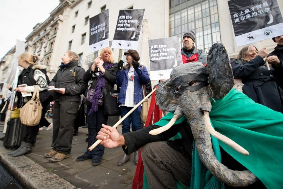 Manifestantes se reúnen frente a la embajada china en Londres, Inglaterra, para pedir el fin del comercio de marfil en China, en el marco de un llamado para prohibir el comercio de marfil y cerrar las fábricas de tallado. La creciente demanda de marfil en Asia está detrás de un número de víctimas cada mayor de elefantes africanos. La foto del 27 de enero fue tomada por Leon Neal de AFP.