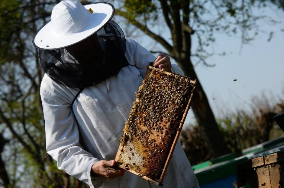 Según el último censo agrícola de 2010, Rumanía cuenta con 42.000 apicultores y 1,3 millones de familias de abejas.. (Foto:AFP/DANIEL MIHAILESCU)