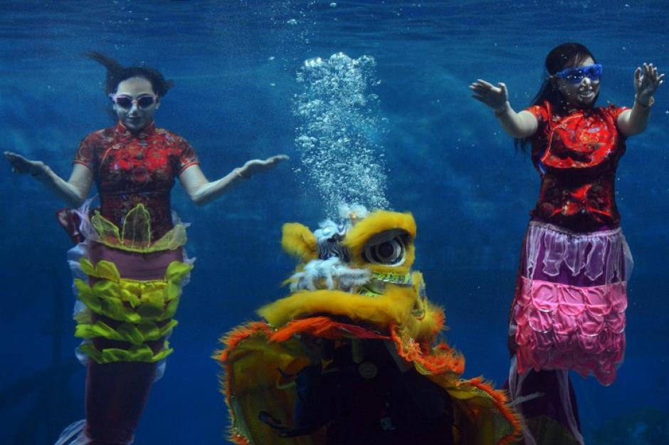 Artistas indonesios vestidos de sirenas realizan bajo el agua una presentación especial para celebrar el Año Nuevo Lunar, en el parque Ancol de Yakarta, el 31 de enero de 2014. AFP