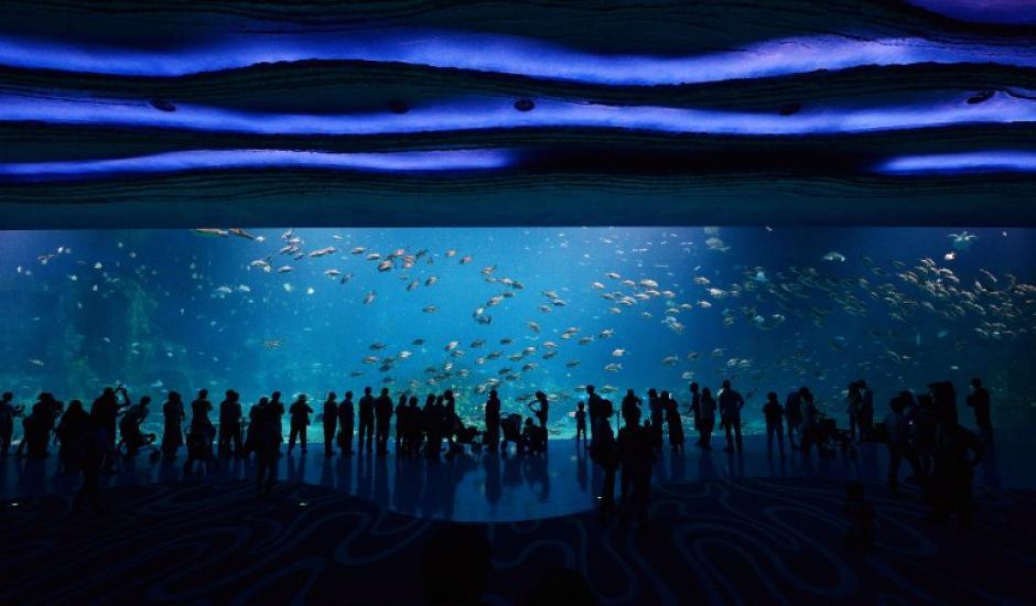 Con un tanque que tiene 22.7 millones de litros de agua, el parque temático acuático en China ha establecido cinco Récords Guinness. (Foto: AFP)