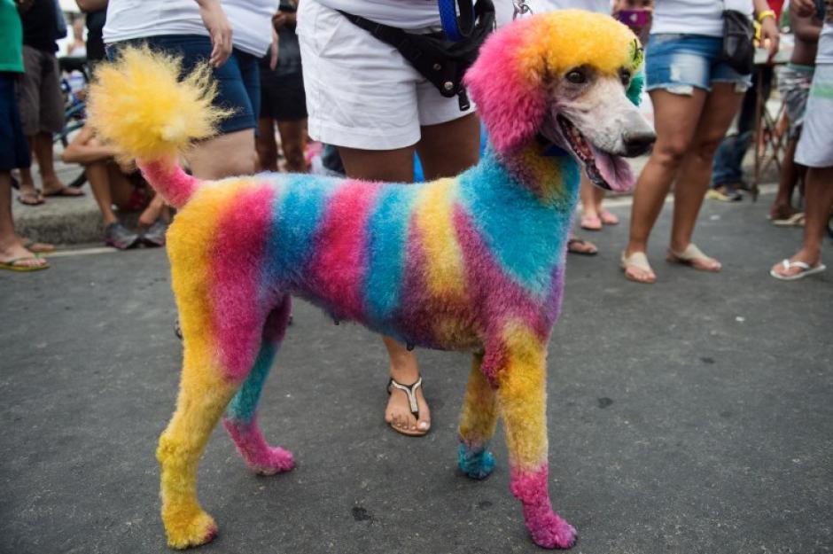 Las mascotas también tienen su carnaval en Brasil. (Foto: AFP)