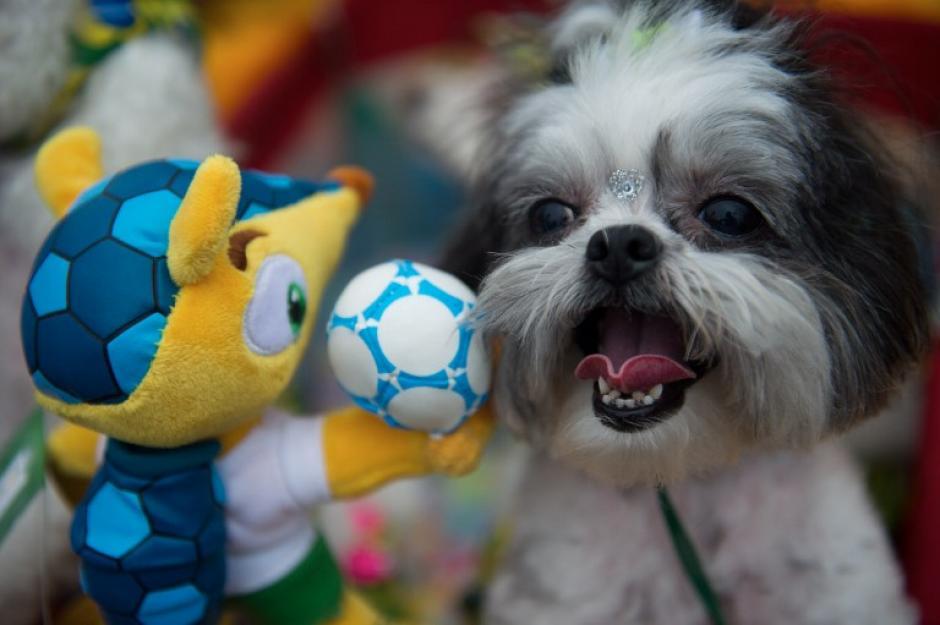 Fuleco, la mascota del Mundial de Fútbol también hace las delicias de las mascotas. (Foto: AFP)