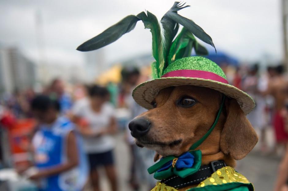 Los sombreros también dan un toque de elegancia a las mascotas. (Foto: AFP)