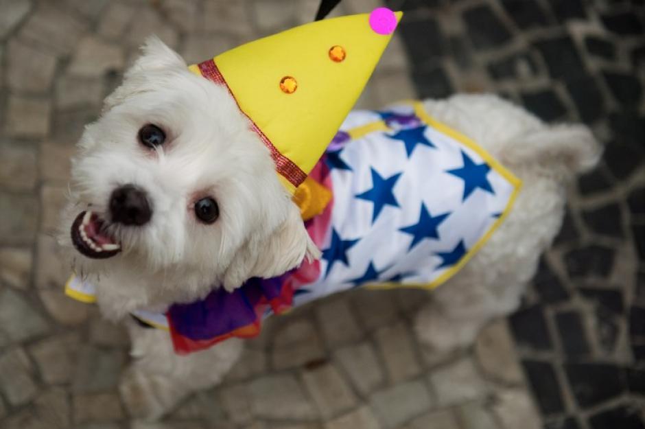 """Una linda y tierna mirada de una mascota disfrazada de """"payasito"""". (Foto: AFP)"""