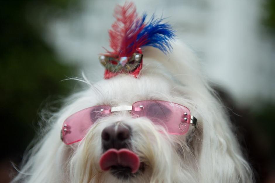 """Las mascotas también lucen accesorios """"a la última moda"""". (Foto: AFP)"""
