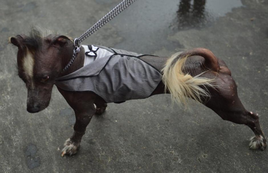 """Una fiesta carnavalesca también amerita un """"smoquin"""". (Foto: AFP)"""
