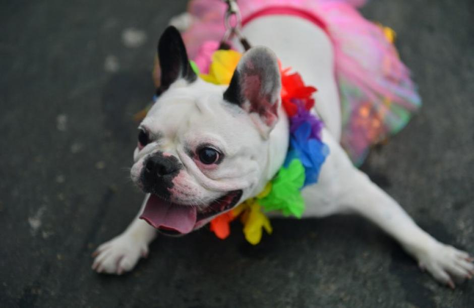 Un perrito disfruta de la fiesta. (Foto: AFP)