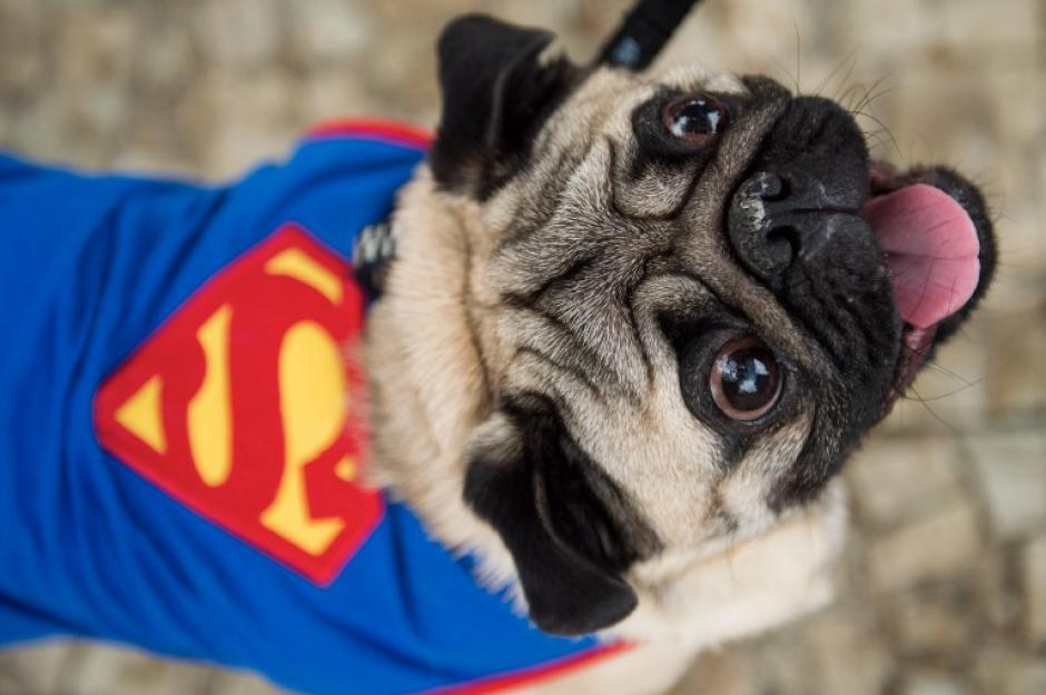 """Los """"superhéroes"""" también tienen su lugar en el carnaval de mascotas. (Foto: AFP)"""