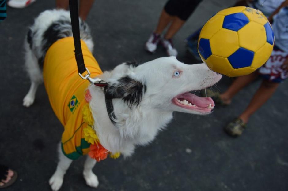 El tema de Mundial de Fútbol, es uno de los que más se observaron en el carnaval de mascotas. (Foto: AFP)