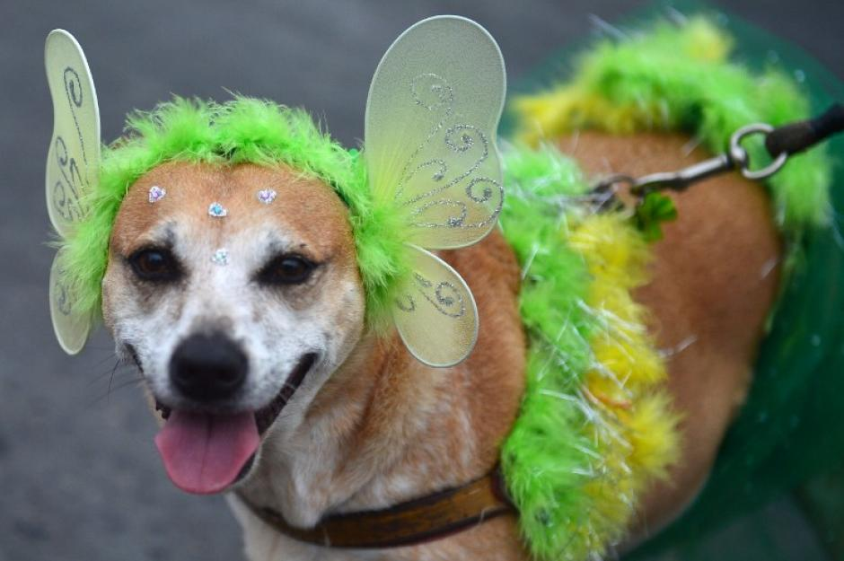 Las mascotas también disfrutan con la fantasía del carnaval. (Foto: AFP)