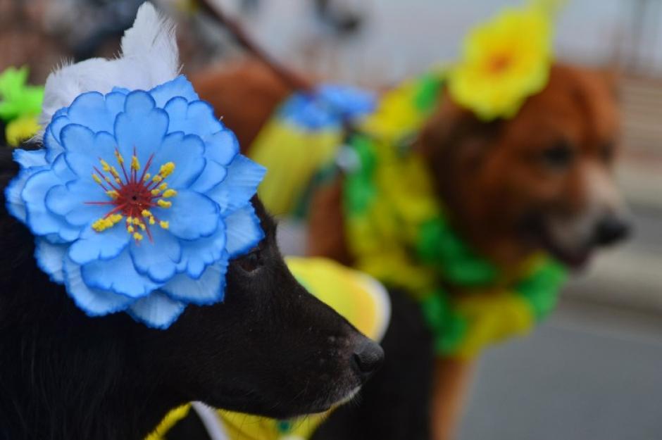 Explosión de alegría y vistosidad fueron parte del Carnaval de Mascotas en Brasil. (Foto: AFP)